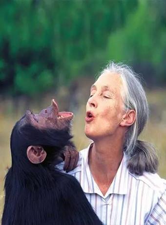 BBC:珍·古道尔—美女与野兽海报剧照